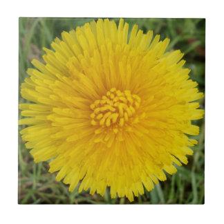 "Dandelion Small (4.25"" x 4.25"") Ceramic Photo Tile"