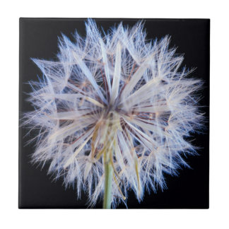 Dandelion (Taraxacum Officinale) Seed Head Small Square Tile