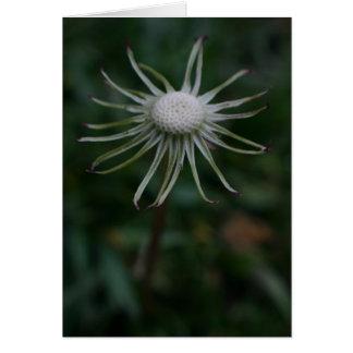 dandelion with no petals card