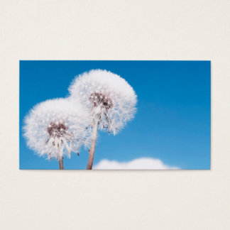 Dandelion with seeds blowing away business card