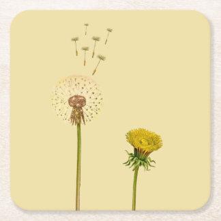 Dandelion, yellow flowers, blowballs, clocks square paper coaster