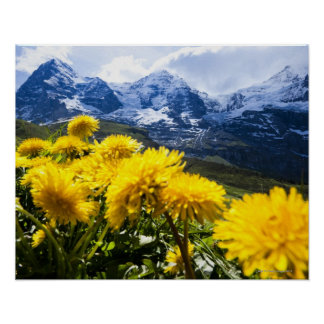 Dandelions in foreground Canton of Bern, Poster
