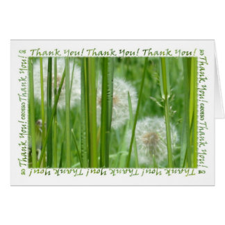 Dandelions in the Green Grass Thank You Card