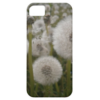 Dandelions iPhone 5 Cover