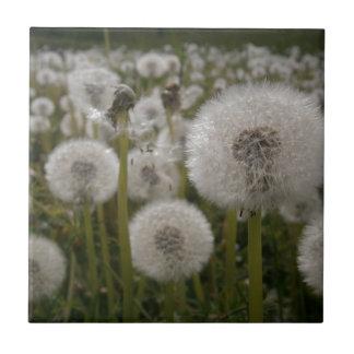 Dandelions Small Square Tile