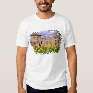Dandelions surround Cesis Castle in central Shirts