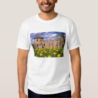 Dandelions surround Cesis Castle in central Tees