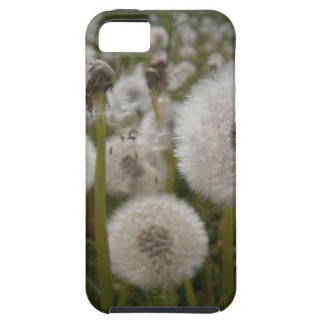 Dandelions Tough iPhone 5 Case