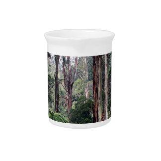 Dandenong Ranges Rainforest, Australia Drink Pitcher
