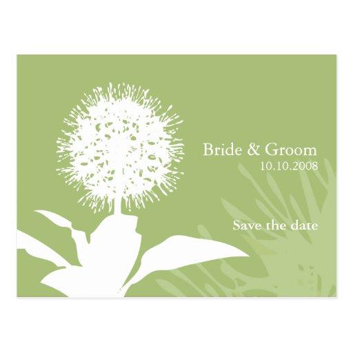 Dandi Colour: Green Post Cards