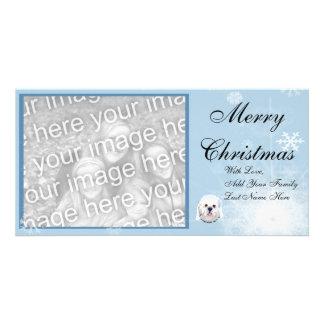 Dandie Dinmont Terrier - Face Portrait Photo Cards