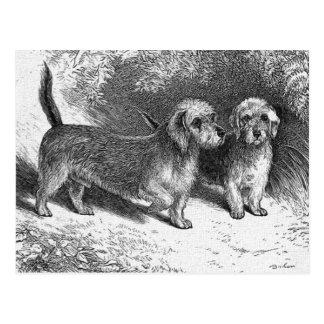 Dandie Dinmonts Vintage Dog Illustration Postcard