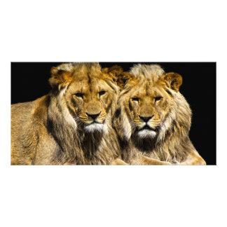 Dangerous Predator Lions Card