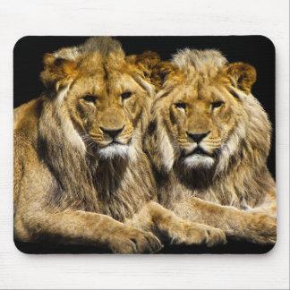 Dangerous Predator Lions Mouse Pad