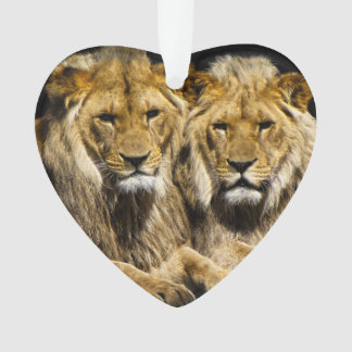 Dangerous Predator Lions Ornament