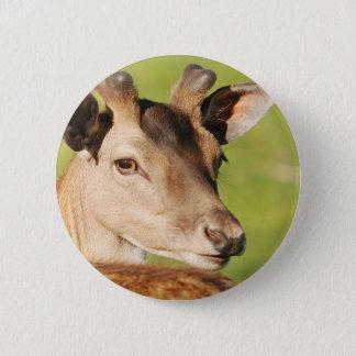 Daniel young smart wild animal 6 cm round badge