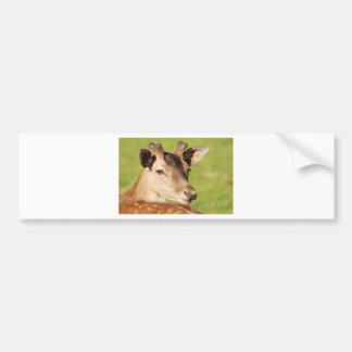 Daniel young smart wild animal bumper sticker