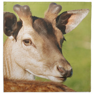 Daniel young smart wild animal napkin