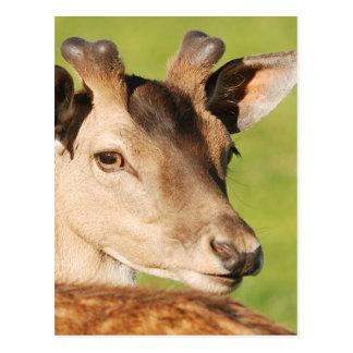 Daniel young smart wild animal postcard