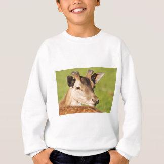 Daniel young smart wild animal sweatshirt