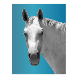 Dapple Grey Horse Postcard