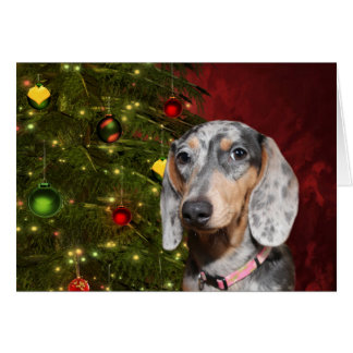 Dappled Dachshund Christmas Card
