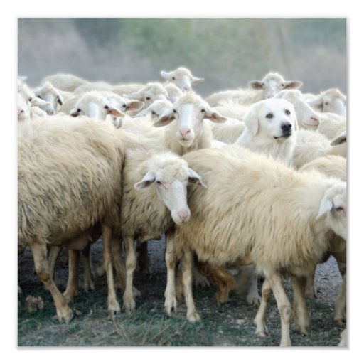 Dare to be different! Sheepdog Saying ... Art Photo