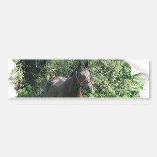 Dark Bay Horse Bumper Sticker