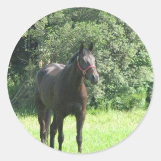 Dark Bay Horse Sticker