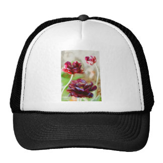 Dark Bordeaux Peony Flowering Tulip Trio Cap