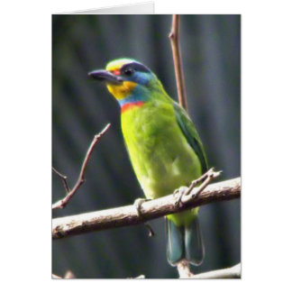 Dark Colored Tail Hangs Under Mostly Green Barbet Card
