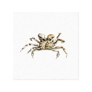 Dark Crab Photo Canvas Print