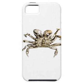 Dark Crab Photo iPhone 5 Case