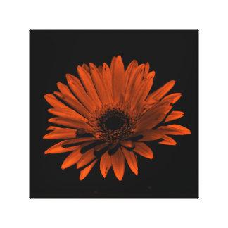 Dark Gerbera Daisy - Orange Canvas Print