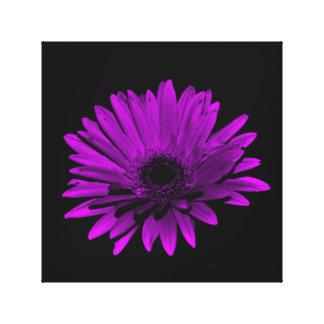 Dark Gerbera Daisy - Purple Gallery Wrap Canvas