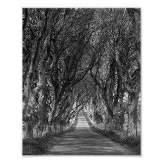 dark hedges distance photo print