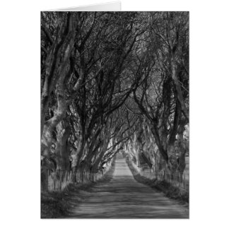 Dark Hedges in Black and White Card