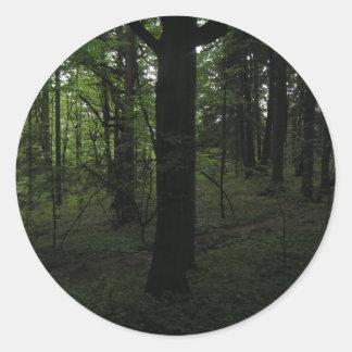 Dark mysticalforest in mid-day classic round sticker