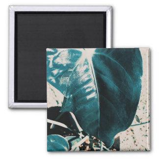Dark Off Green Plant Leaf Magnet