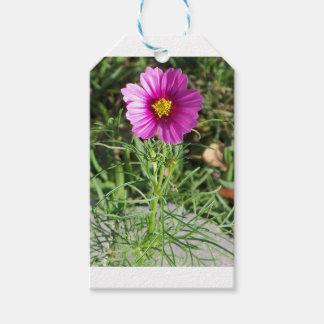 Dark pink Cosmos daisy flower Gift Tags