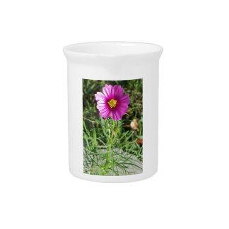 Dark pink Cosmos daisy flower Pitcher