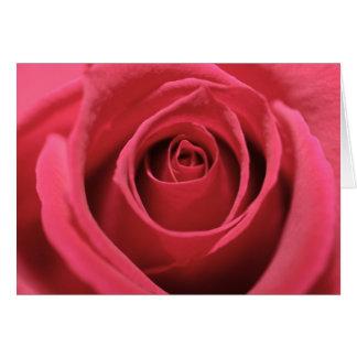 Dark Pink Rose 01 Card