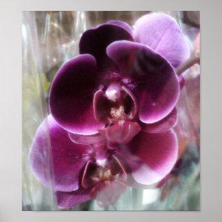 Dark Purple Moth Orchids Poster