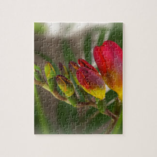 dark red freesia jigsaw puzzle
