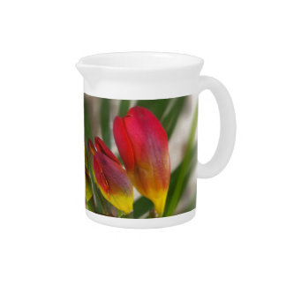dark red freesia pitcher