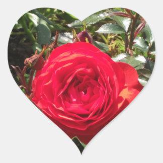 Dark Red Rose Heart Sticker