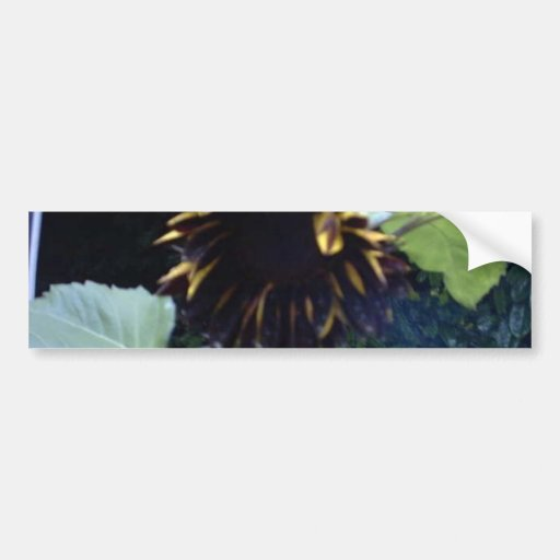 Dark Sunflower in Day Bumper Stickers