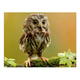 Darling Owl Postcard