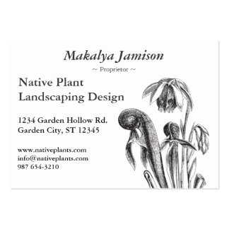 Darlingtonia californica, Carnivorous Plant Pack Of Chubby Business Cards