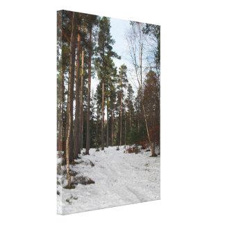 Darnaway Forest Northern Scotland Canvas Print